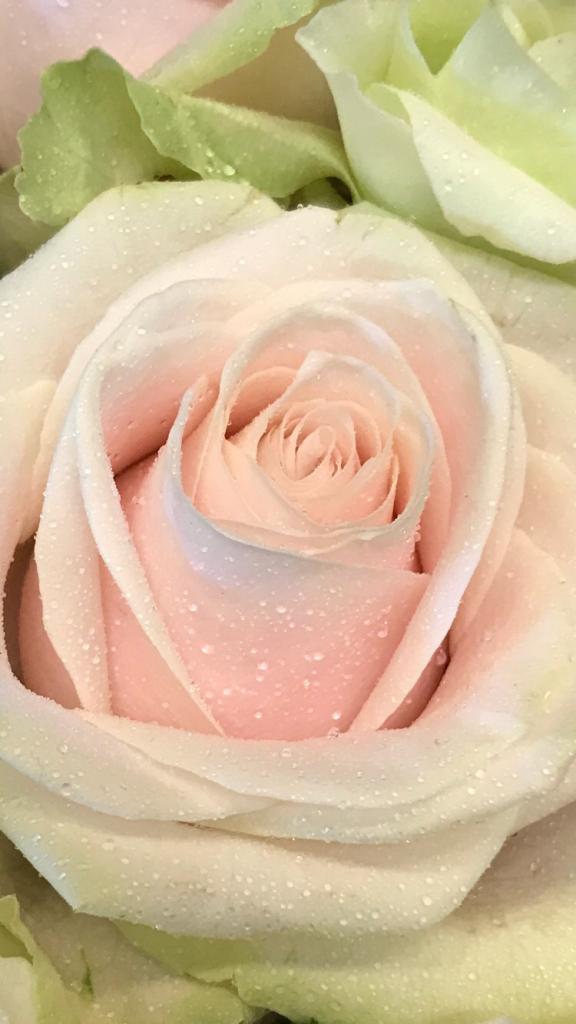 the florist 6