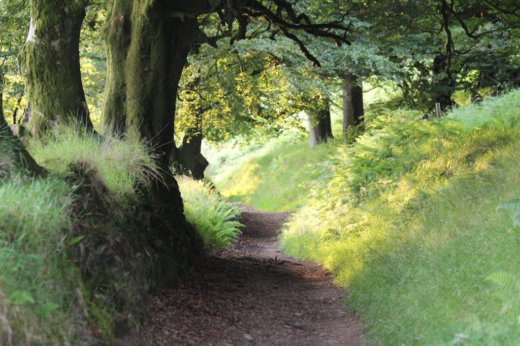 woodland-walks-at-highbullen-hotel_32972406228_o
