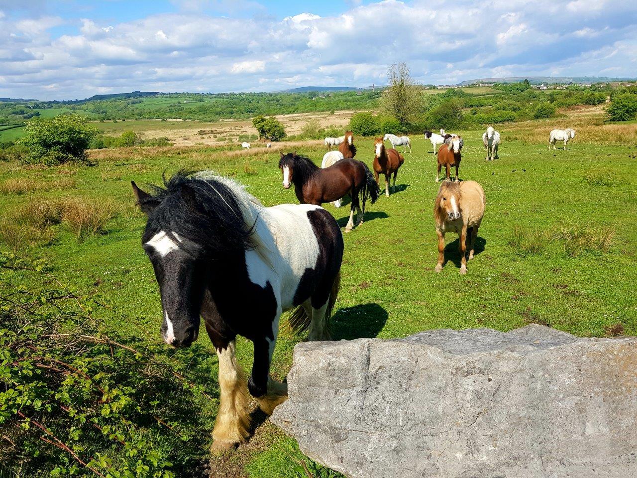 Horses on Llantrisant Common VL
